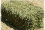 Заготовка сена для кроликов