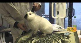 Подробнее: Оценка кроликов экспертами кролиководами на специализированной выставке