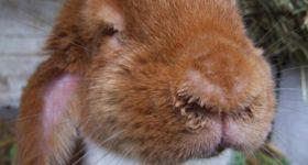 Подробнее: Инфекционный ринит (заразный насморк) с фото