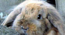 Подробнее: Ринит у кроликов: симптомы и лечение